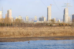 City and wildlife Stock Photo