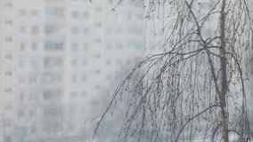 City, winter landscape. Snowfall in the city, winter landscape stock video footage