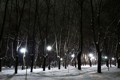 City winter park at night Stock Images
