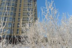 City winter scene, trees covered with snow and residential high rise apartment building at background. stock image