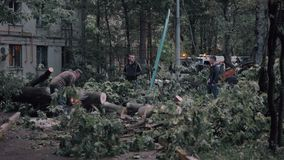 City workers taking efforts to cope with storm aftermath. Moscow, Russia. MOSCOW, RUSSIA - MAY 29, 2017: Workers cutting fallen trees and removing them from the stock video