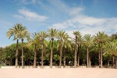 Citypark con i palmtrees Fotografia Stock Libera da Diritti