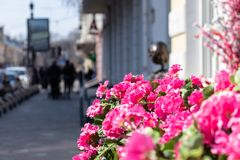 City with pink flowers stock photos