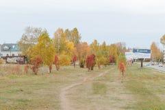 cityscape Drzewa r w mieście Miasto aleje z drzewami obrazy stock