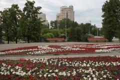 cityscape Gränden i parkerar på den Tolmacheva gatan i Yekaterinburg blomsterrabatten petunias royaltyfria foton