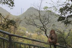 Cityscape of Guiyang at noon, Guizhou Province, China with monkey on foreground. stock photo