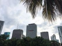 Cityscape of modern miami, florida skyscrapers with palm trees leaves and fronds overhead royalty free stock image