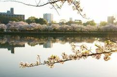 The cityscape of Osaka Royalty Free Stock Images