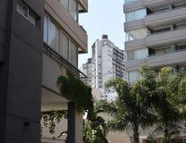 Cityscape palmträd mellan hus, Arkivbild