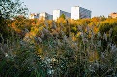 cityscape tempa Drzewa Bereg staw płocha obrazy royalty free