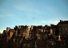 Cityscape van Edinburgh met Vogels stock afbeelding