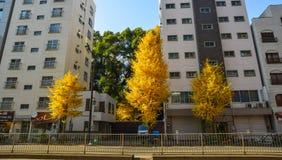 Cityscape van Tokyo, Japan royalty-vrije stock fotografie