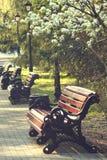 cityscape Vicolo nel parco sulla via l'8 marzo a Ekaterinburg fotografia stock libera da diritti