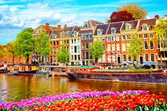 Cityscape view of the canal of Amsterdam in summer with a blue sky and traditional old houses. Colorful spring tulips flowerbed on