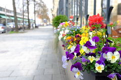 Cityscene with flowers Royalty Free Stock Image