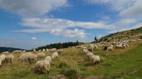 Ciucas山在罗马尼亚35 库存照片