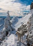 Ciucas mountains. Mountain landscape in Carpathians (Romania), in the winter season, Ciucas mountains Royalty Free Stock Images