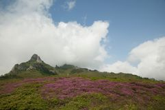 Ciucas Mountains. Pink flowers and geological formations, Ciucas mountain in Romanian Carpathians Stock Image