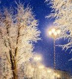 Ciudad colorida de la noche del invierno - linterna brillante entre los árboles del invierno y los copos de nieve nevosos del inv Foto de archivo