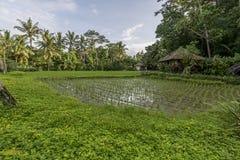 Ciudad de Bali de dioses Fotografía de archivo libre de regalías