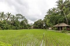 Ciudad de Bali de dioses Foto de archivo