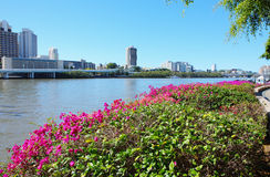Ciudad de Brisbane Fotos de archivo