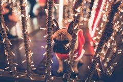 Ciudad de la Navidad del dogo francés al aire libre imagenes de archivo