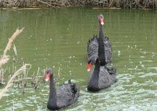 Ciudad de la playa de la región de Berdyansk Zaporozhye Los pájaros y los animales exóticos del parque zoológico local descansan  Imagenes de archivo