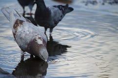 Ciudad de las palomas en agua Fotos de archivo