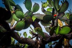 Ciudad de Mexico för la för Jardin botanicoen Royaltyfria Bilder