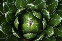 Ciudad de Mexico för la för Jardin botanicoen Royaltyfri Foto