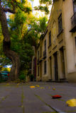 Ciudad de Mexico för Parques y calles en-la Royaltyfria Bilder