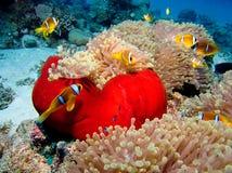 Ciudad de Nemo Imagenes de archivo