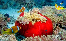 Ciudad de Nemo Fotografía de archivo libre de regalías