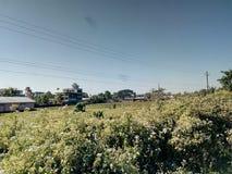 Ciudad de Patsala, Assam, la India imagenes de archivo