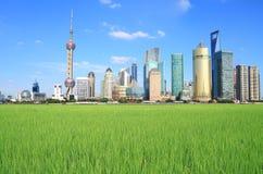 Ciudad de Shangai Lujiazui del paisaje del campo Imagen de archivo libre de regalías