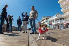 CIUDAD del OCÉANO, los E.E.U.U. - 24 de abril de 2014 - gente que camina el paseo marítimo en ciudad famosa del océano de Marylan Imagen de archivo