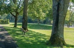 Ciudad Hall Park Fotografía de archivo libre de regalías