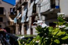 Ciudad histórica de Cefalu, Sicilia Foto de archivo libre de regalías
