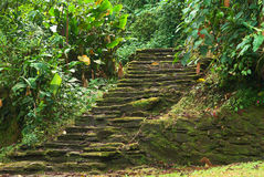 Ciudad Perdida (Lost City) in Northern Colombia. Old stone stairs in Ciudad Perdida (Lost City), built by the people of Tayrona. This archeological site is close Stock Photography