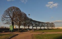 Ciudad septentrional rusa de St Petersburg árboles plantados de la avenida Leto parque, cielo, azul, río del horizonte Fotos de archivo libres de regalías