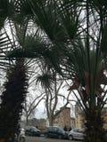 Ciudad a través de árboles fotografía de archivo libre de regalías