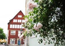 Ciudad vieja, Alemania, calle, flores blancas Fotos de archivo libres de regalías