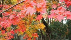 Ciudad vieja Japón de Kurashiki Imagen de archivo libre de regalías