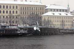 Ciudad vieja Praga Fotografía de archivo libre de regalías