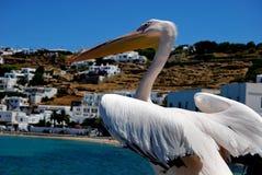 Ciudad y pelícano de Mykonos Imágenes de archivo libres de regalías