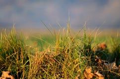 Ciuffo d'erba al tramonto Immagini Stock Libere da Diritti