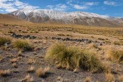 Ciuffo d'erba che cresce sui pendii in alpi del sud Fotografie Stock