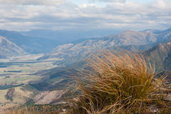 Ciuffo d'erba in vento in alpi del sud Fotografia Stock