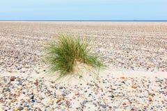 Ciuffo di erba nella sabbia Immagine Stock